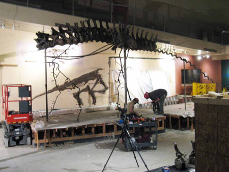 Head, neck vertebrae and most of the tail vertebrae removed