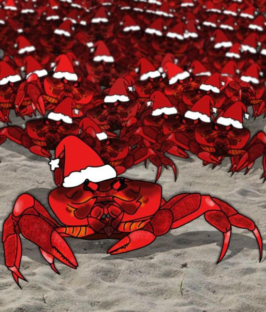 Christmas Island Red Crab.Here Come Santa Claws No Bones