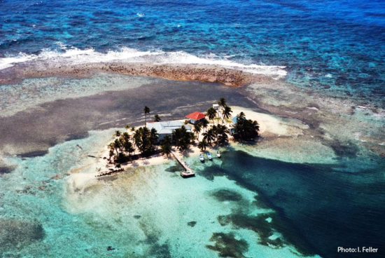An aerial view of the Carrie Bow Cay research station. (Credit: I. Feller)