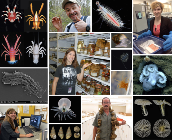 Collage of highlights taken from a sampling of our 2014 blogs.