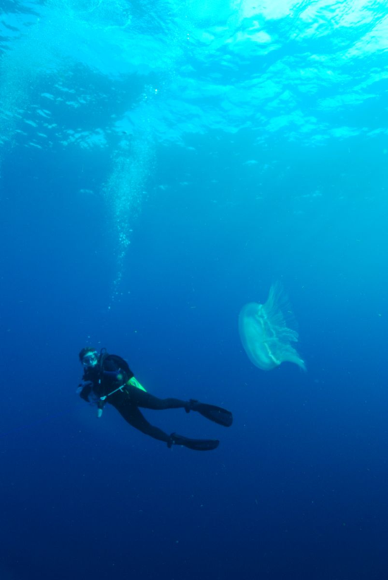 Jamie Baldwin-Fergus, here scubadiving with a large jellyfish, studies the visual adaptations of hyperiid amphipods.