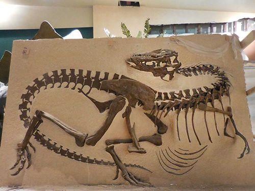 Gorgosaurus on ground2
