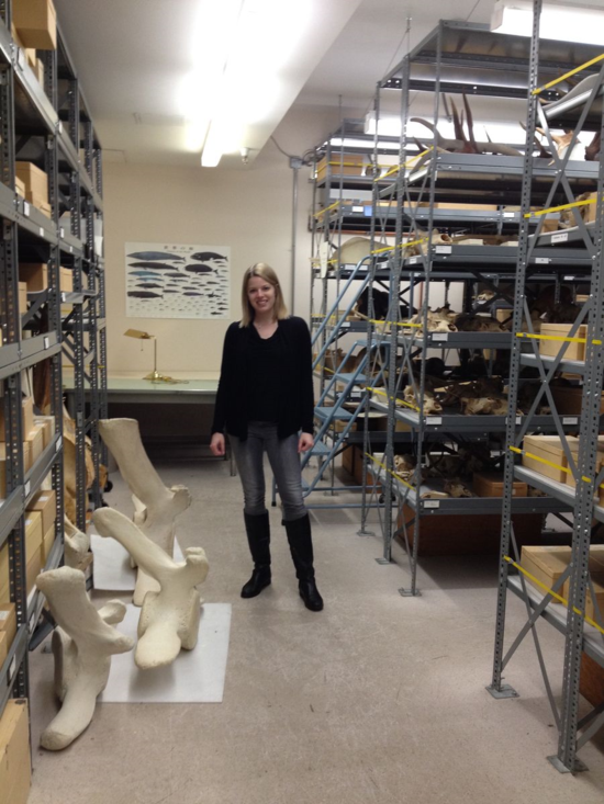 Feeling at home among the bones of thousands of species, on a brief visit to the Museum of Vertebrate Zoology at UC-Berkeley.
