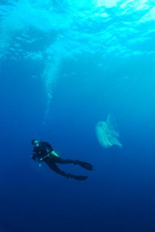 Jamie buceando en el Atlántico Norte. (crédito: Mike Lombardi)
