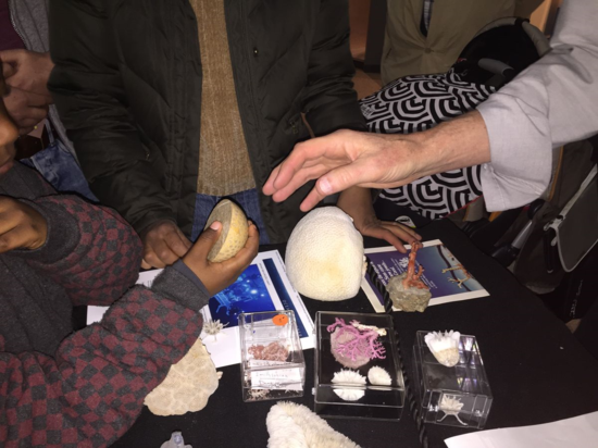 A variety of coral specimens was shared with visitors. Here a visitor holds a polished piece of a fossil coral. As might be expected, corals have a rich fossil record due to their resistant skeletons.