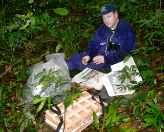 Stephen Smith pressing plants in Gabon, 2002. (Photo by Deborah Bell)