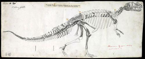 Gilmore Ceratosaurus