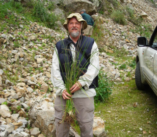 Soreng captures the wild and elusive Poa horridula Pilg. in Peru in 2007. (Photo by K. Romaschenko)