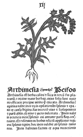 A drawing of Artemisia from Herbarius Patavie, 1485, f. 12 recto.