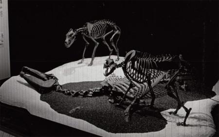 Equus.small