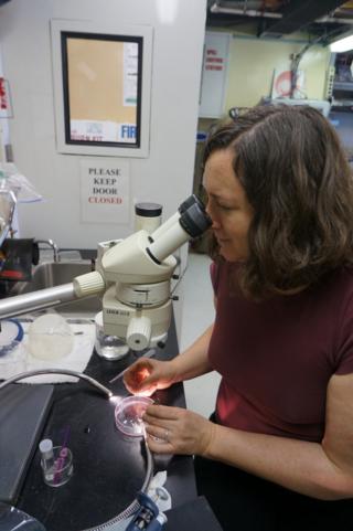 Karen Osborn dissecting