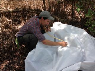 Luke Powell using an aspirator to collect tiny beetles