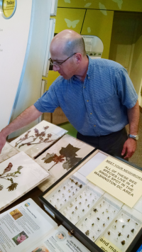 "Gary Krupnick displays plant and bee specimens and talks about the importance of nectar- and pollen-producing trees for native bees during an ""Expert is In"" session at the National Museum of Natural History. Krupnick served as one of the scientific advisors for the 2016 Pollinator Week poster ""Trees for Bees."""