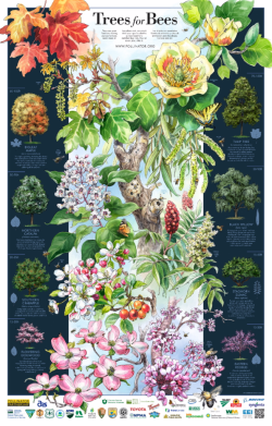 "The 2016 Pollinator Week poster, ""Trees for Bees."""