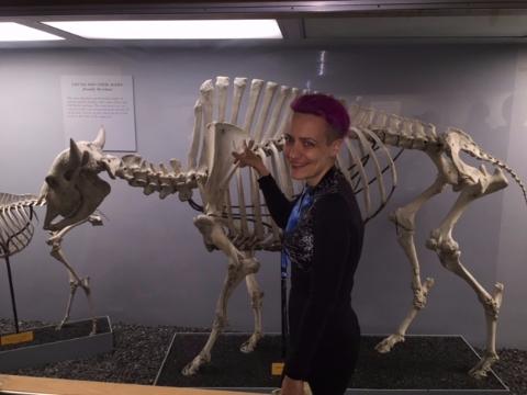 Bison skeleton at NMNH