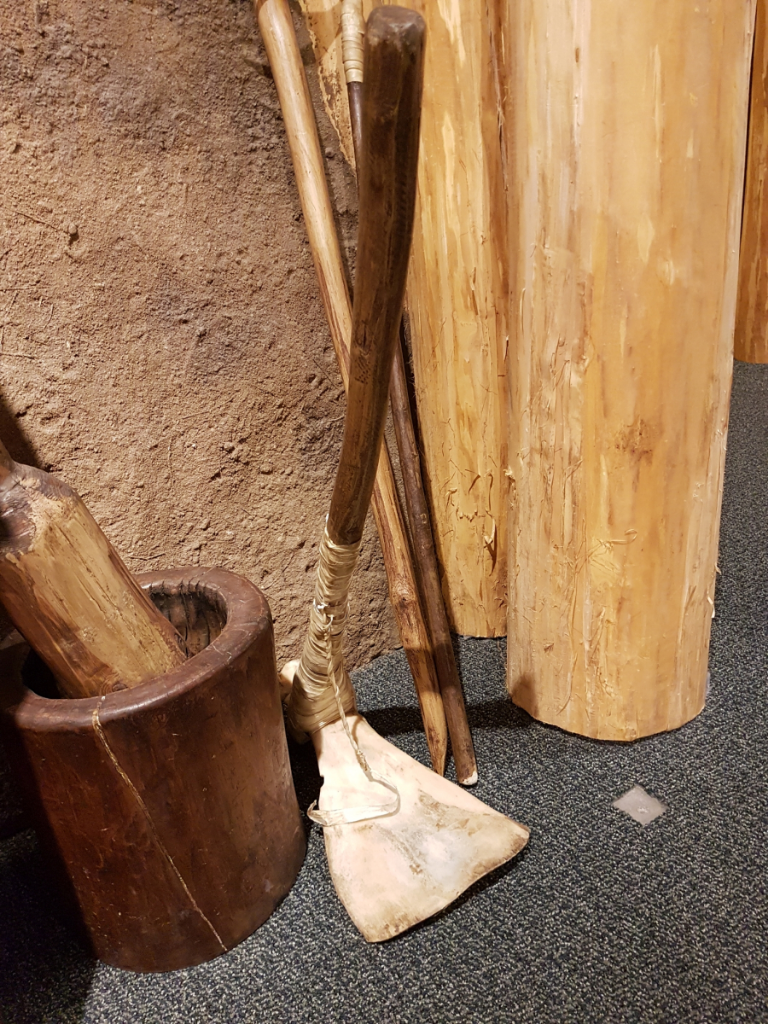 Bison scapula hoe, with wooden handle attached, sitting among other replica tools used for educational purposes. If you've been reading our River Basin Surveys collections posts, you might know that in archaeological contexts, we don't normally find those with the wooden handles still attached, so our photos look a bit different. (Photo Lotte Govaerts)