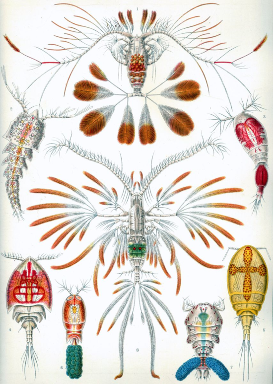 Figure 1. Haekel's famous illustration of wildly beautiful copepods.