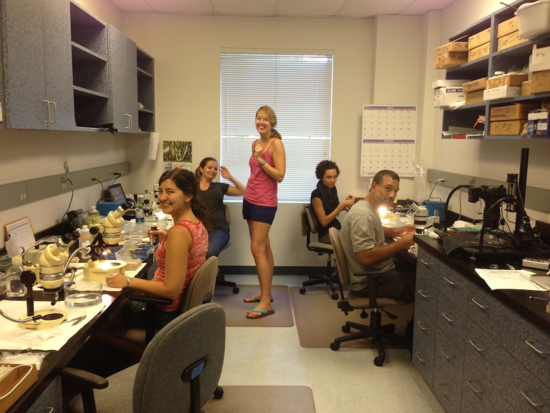 Many of our group in the Visiting Scientists Lab at SMS. Photo credit: Karen Osborn.