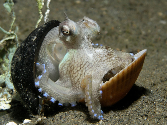 3. Octopus with shells.jpg
