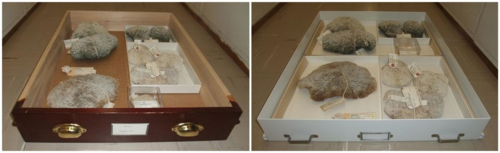 PHOTO 2: A comparison of an old drawer (left) versus the new one (right), holding the same specimens. (Credit: Tim Coffer)