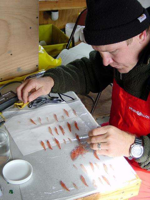 Scientist studies krill