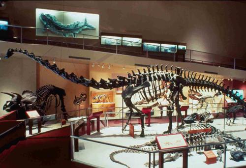Diplodocus in 1986