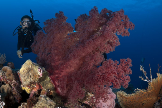 Diving the Great Barrier Reef, Australia (Photo Credit: Shea Callaghan)