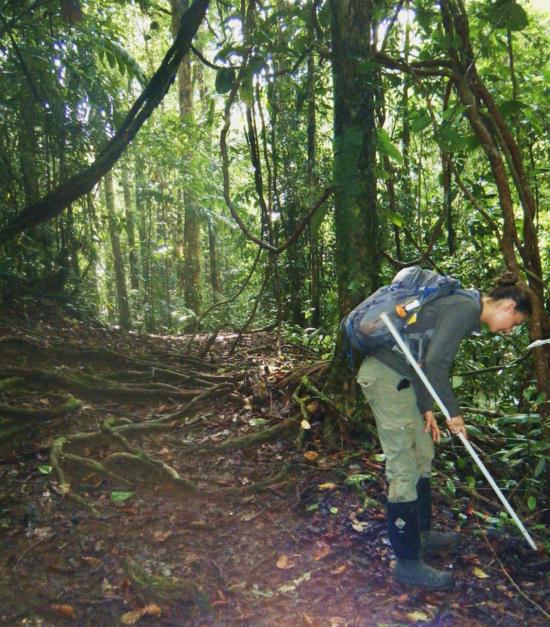 Field work at La Selva Biological Station in Costa Rica