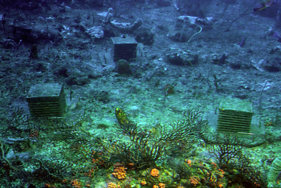 Researchers deploy ARMS (Autonomous Reef Monitoring Structures) in marine environments to study the local biodiversity. After allowing organisms to adhere to the surfaces of the units, the ARMS are recovered and the organisms are identified through both morphological and genetic studies. (Credit: Barry Brown)