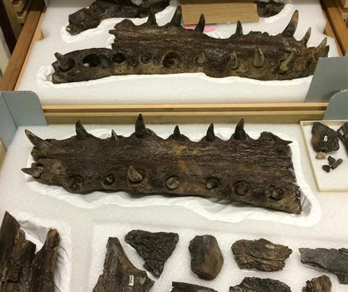 Gavialosuchus2