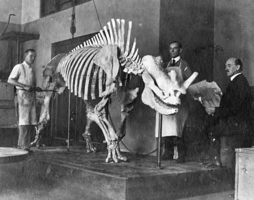 VP Prep Lab 1919 Titanothere