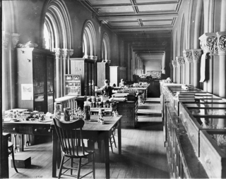 Mary Jane Rathbun in the Smithsonian Institution Building Great Hall Offices, 1903, by Unknown (Smithsonian Institution Archives, 16983 or 16853 or 18938 or AI-18938)