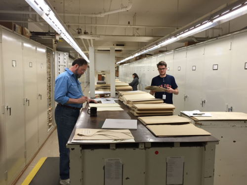 In preparation for rapid imaging, the United States pteridophyte herbarium is undergoing reorganization to reflect the current understanding of evolutionary relationships. Greg McKee (left) and Spencer Goyette (right) work to implement the new system, while Laura Tancredi attaches species folder barcodes. (photo by Eric Schuettpelz)