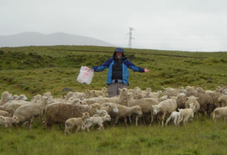 Soreng at 4,380 m in Peruvian altiplano with his flock in 2007