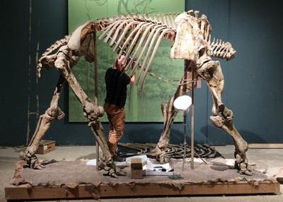 Stegomastodon dismantling