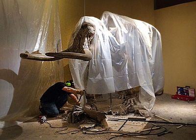 Stegomastodon removal