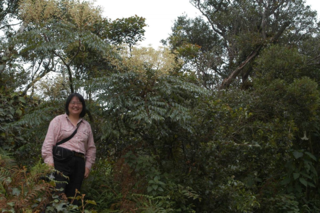 Jun Wen collecting Aralia bipinnata Blanco in Benguet Province, Luzon, the Philippines, September 2004. Photo by Martin Sands.