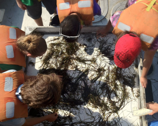 After seining on a SERC trip in the southern Chesapeake Bay, we collected data on the numbers and percentage of grass shrimp (I'm in the top left corner)