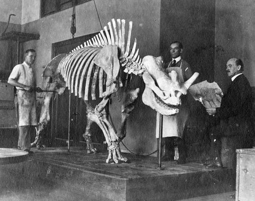 Gidley with Megacerops coloradensis (USNM 4262)