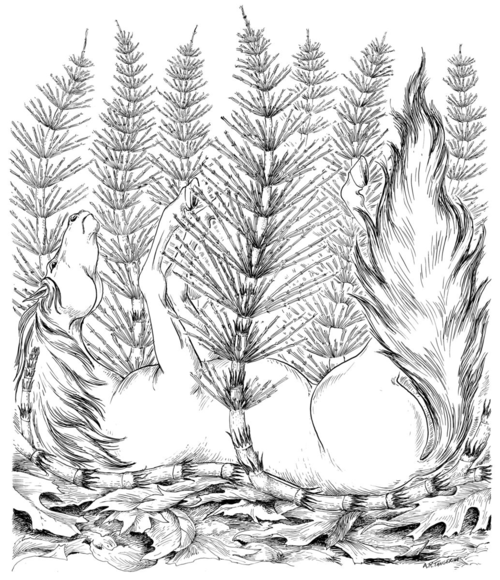Equisetum arvensi L. Illustrated by Alice Tangerini