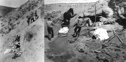 men and horses carrying equipment and specimens from the Hagerman quarry