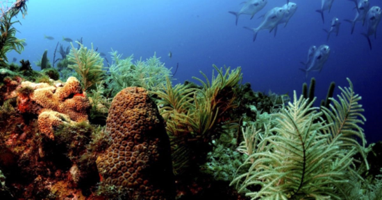 A vibrant coral reef. Source: NOAA.