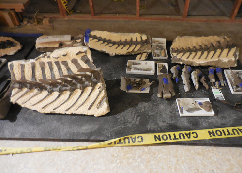 Slabs and individual bones removed from the mount arranged on a foam pad.