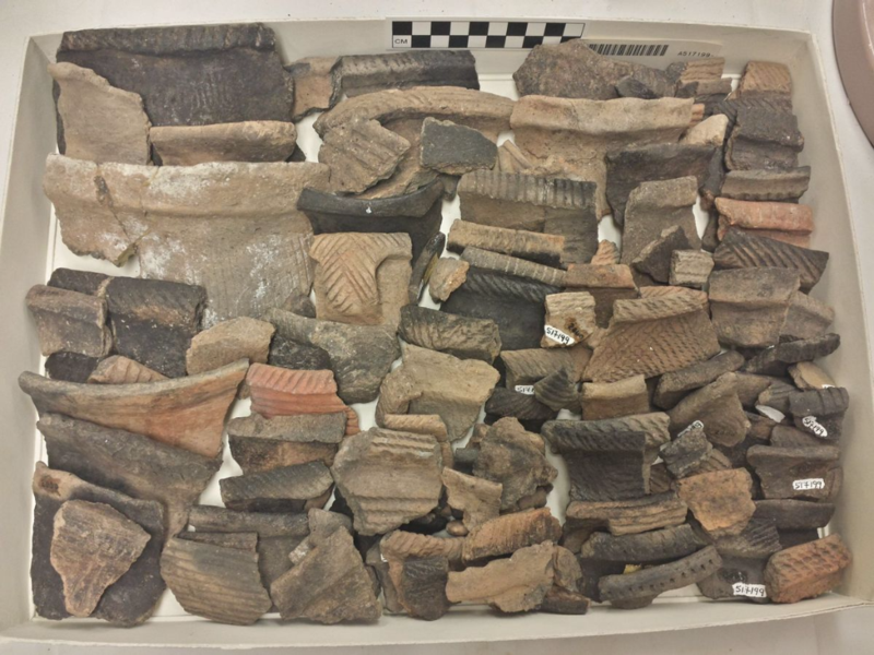 Box of rim sherds