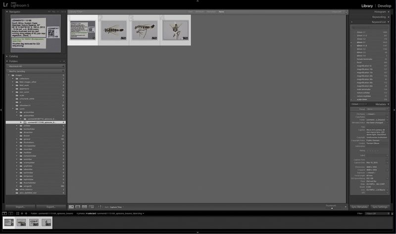 Macrophoto_setup_lr_screen7