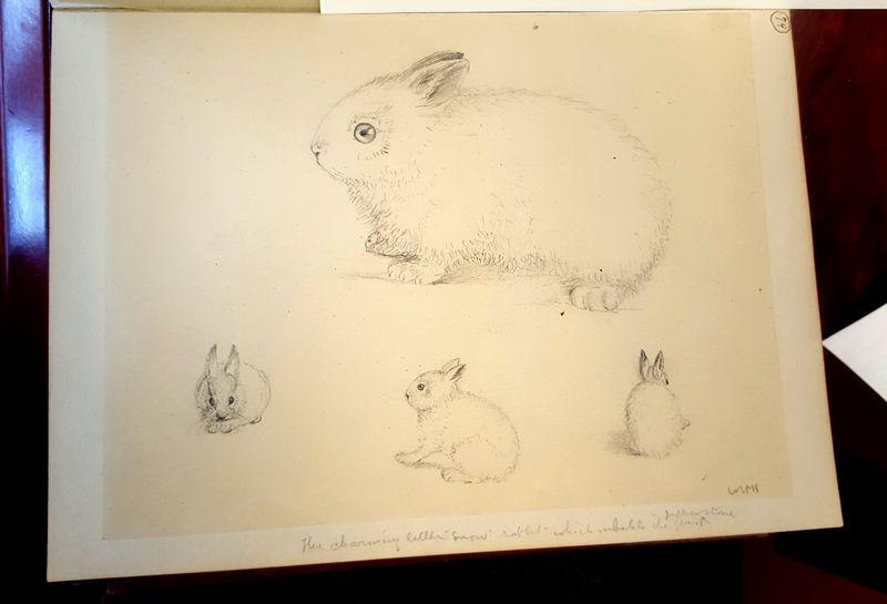 Rabbit_Yellowstone_Holmes