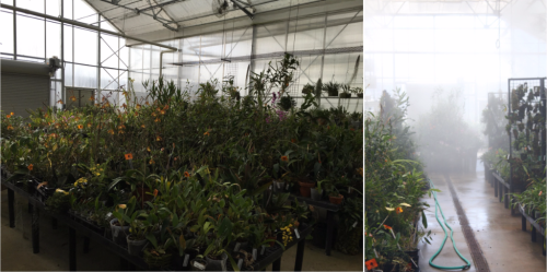 Two views inside Greenhouse 11, where orchid species are kept at SI Gardens in Suitland, MD. Photo credit: M. Gostel (left) and SI Gardens (right).