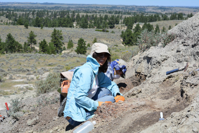 Excavating around the exposed fossils.