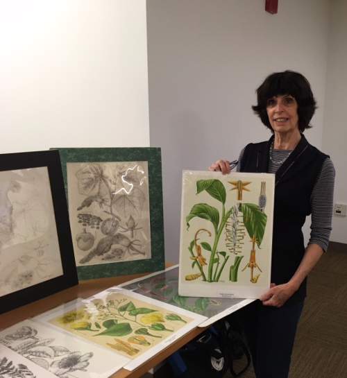 Alice Tangerini displays samples of her botanical illustrations at the Smithsonian Libraries event, Indoor Recess. (photo by Robin Everly)