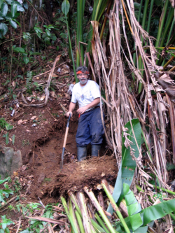 Mike Bordelon collecting Heliconia rhizomes in Dominica in 2005. (photo by Ida Lopez)